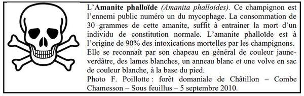 """""""La famille des ammanites"""""""