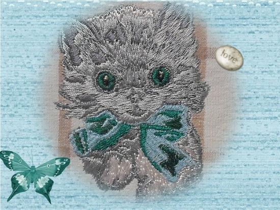 chat gris bleu