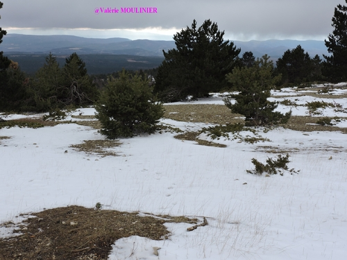 Le Mont Ventoux : mes photos
