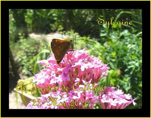 Quelques insectes et papillons
