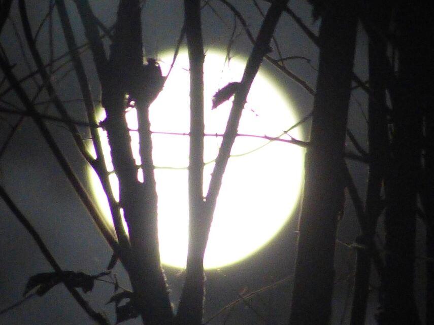 La lune et moi...