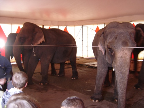 Visite au cirque Arlette Gruss