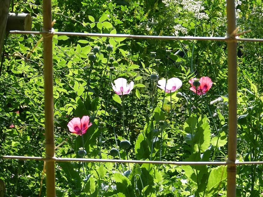 J'ch'suis descendue dans mon jardin ♪