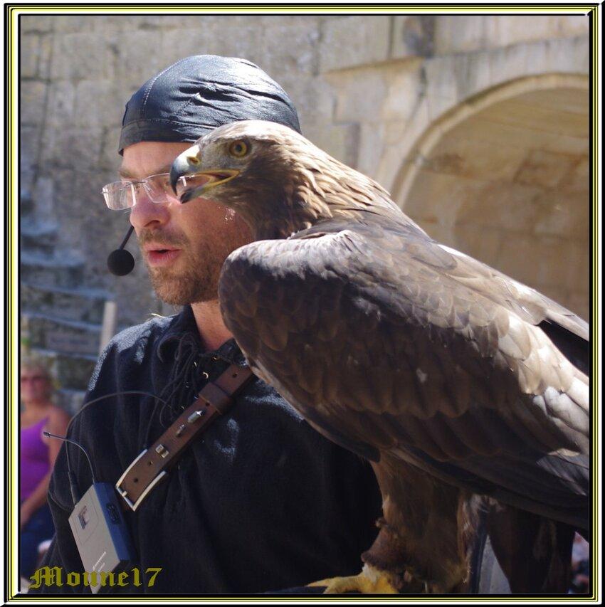 Présentation de rapaces au château de St Jean d'Angle (17)