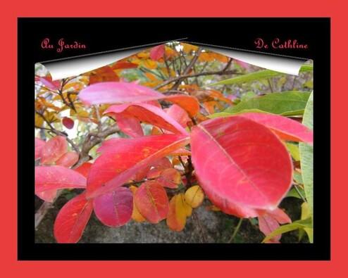 feuilles-lagerstroemia-18-novembre-2014--75-.JPG