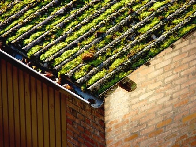 Un toit végétalisé à Metz 5 Marc de Metz 2012
