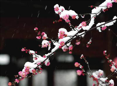 Tu es une fleur qui résiste au froid hivernal ♥