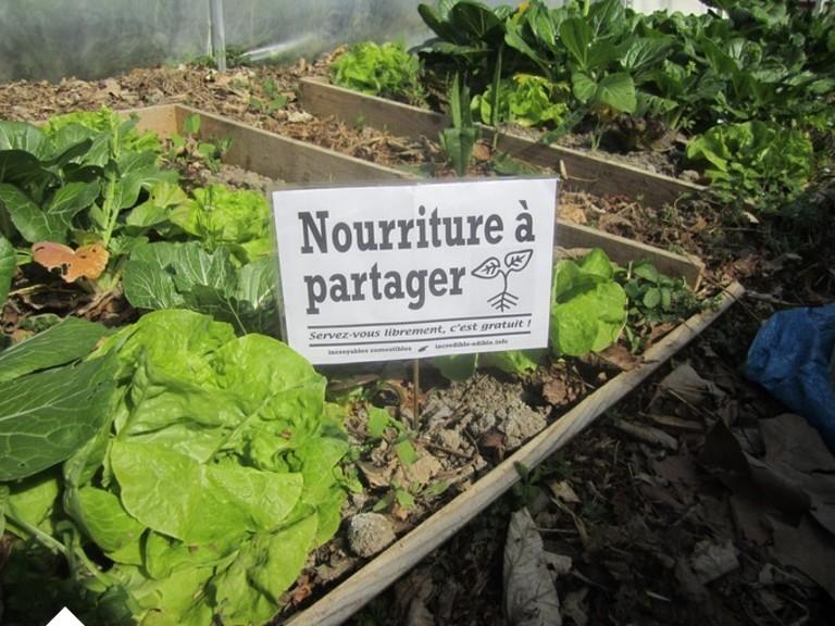 Avec les Incroyables Comestibles, les légumes poussent au coin de la rue