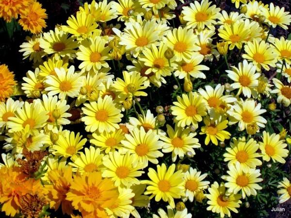 F14 - Des fleurs jaunes