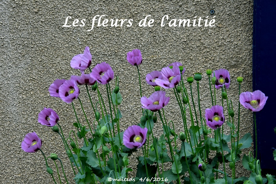 Les fleurs de l'amitié