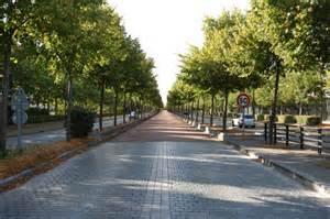 Poitiers : 178 arbres abattus, avenue de l'Europe