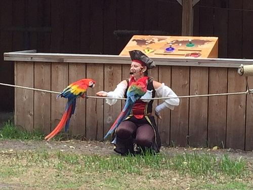 Suite du spectacle des oiseaux