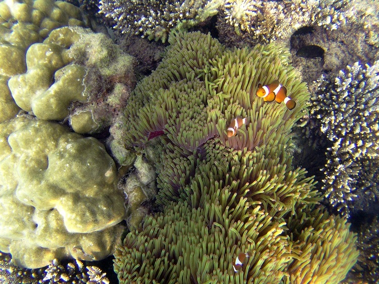 19 Juillet- Kapas, un îlot presque vierge au large de Marang