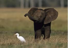 Les éléphanteaux