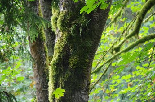 Sattle et la chaine des Cascades