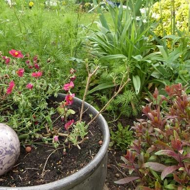 La pépinière Fleurs et Senteur : un voyage au pays des sauges