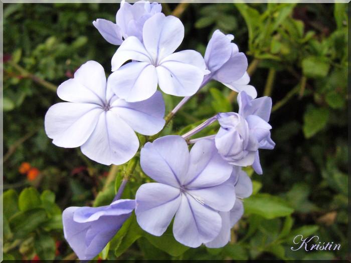 Bleu et rose