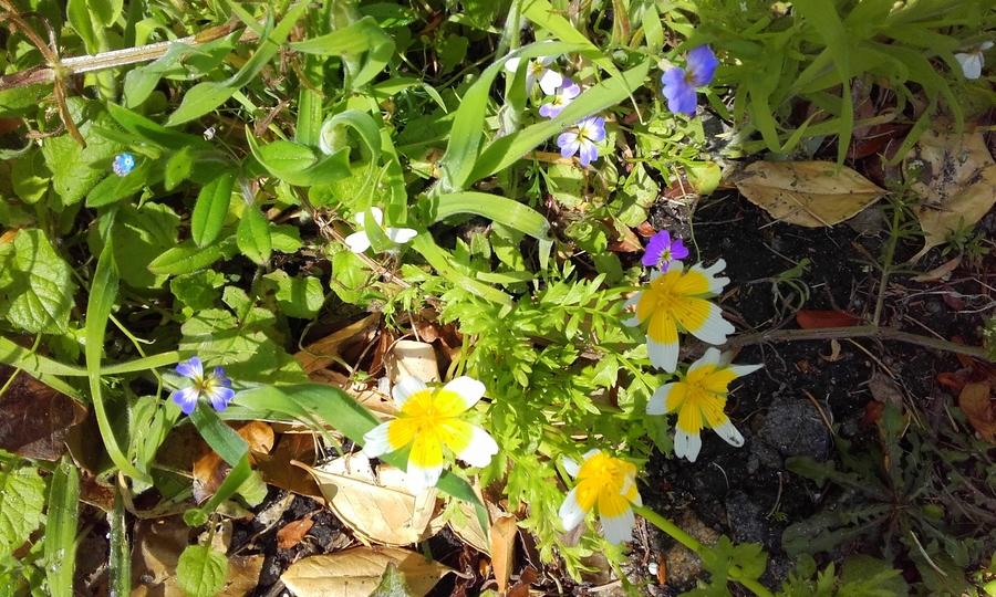 semis  de fleurettes