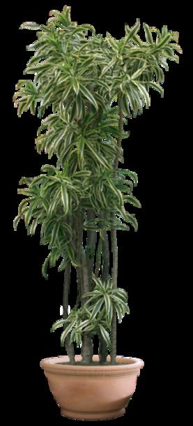 Plantes vertes 2