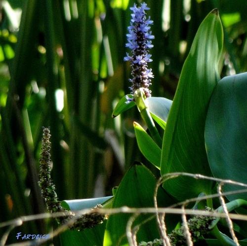 Les fleurs ou les herbes
