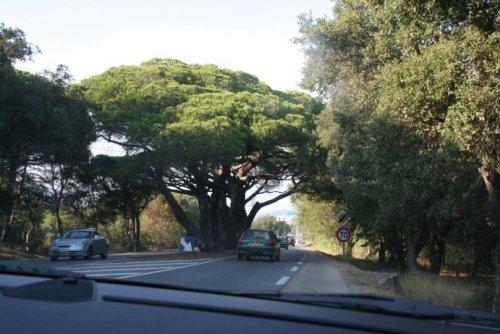 arbreremarquablesttropez001gn9-ac6b7.jpg