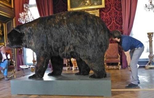 Dans la peau de l'ours Poincheval oeilleton