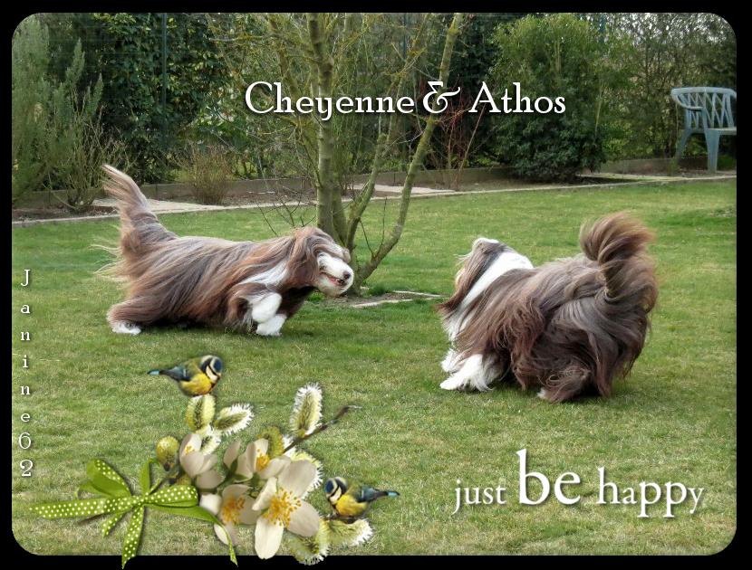 ♥ Bon début de semaine d' Athos & Cheyenne ♥