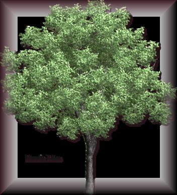 Tubes d'arbre 2968