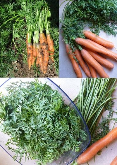 Tarte aux fanes de carottes et graines de sésame