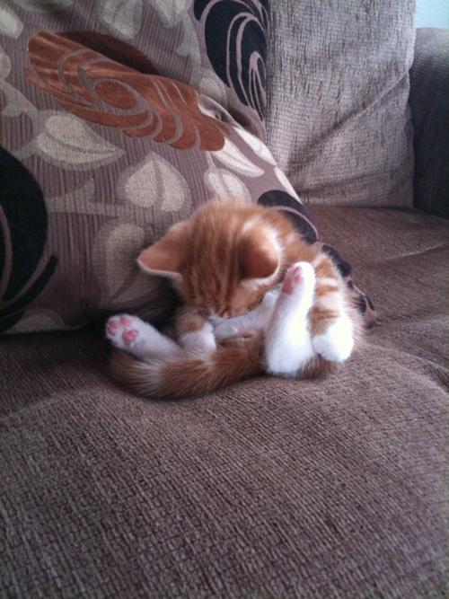 Images de chats qui dorment...