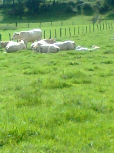 Farmland returned to nature