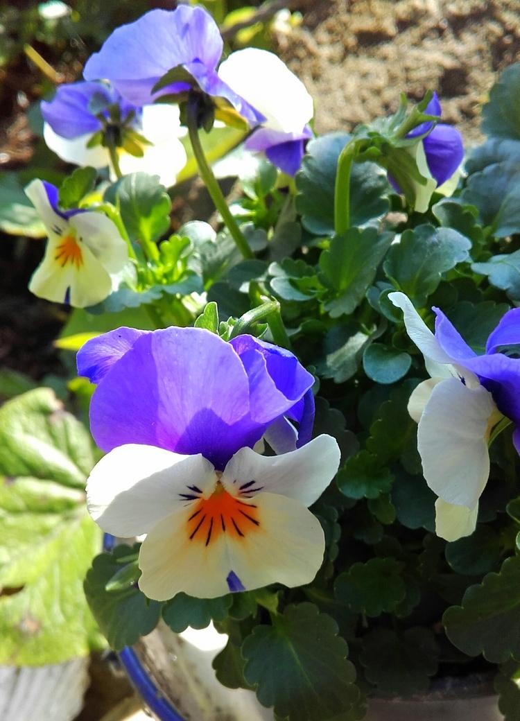 Fleurs     de  bons  gouts