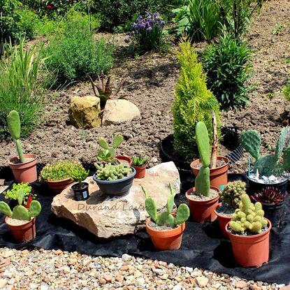 31 mai 2014 - Déco de cactus et succulentes en été