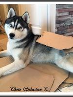 Neïko (10 mois)