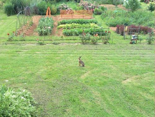 Le lièvre et la musaraigne
