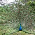 Jolis plumages