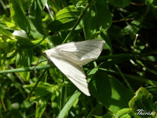 papillons--3-.JPG