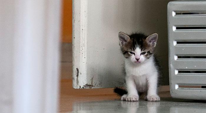 Les Petits Félins 2 - 20 images de chats en colère