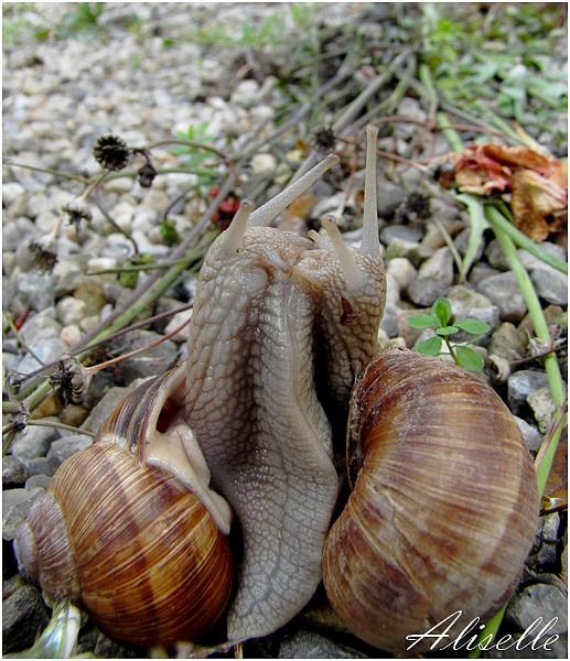 Escargots...