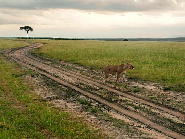 Route paysage lionne