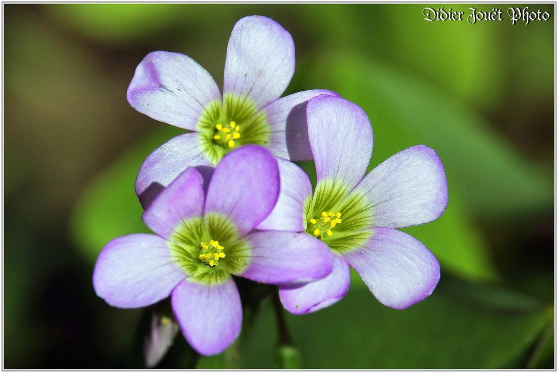 Z'autres... Fleurs & Plantes