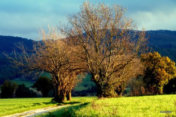 f01---Des-arbres.JPG
