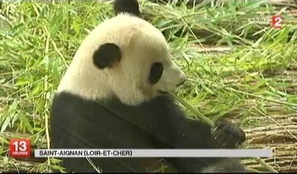 Pandas-2.jpg