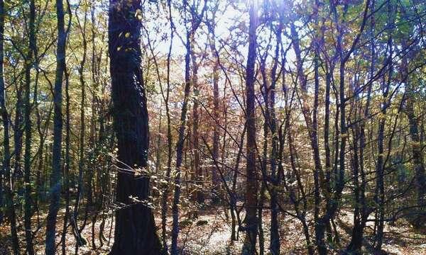 Forêt-30oct