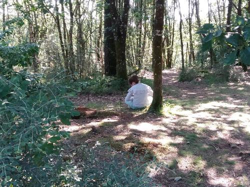 Temps d'observation en forêt