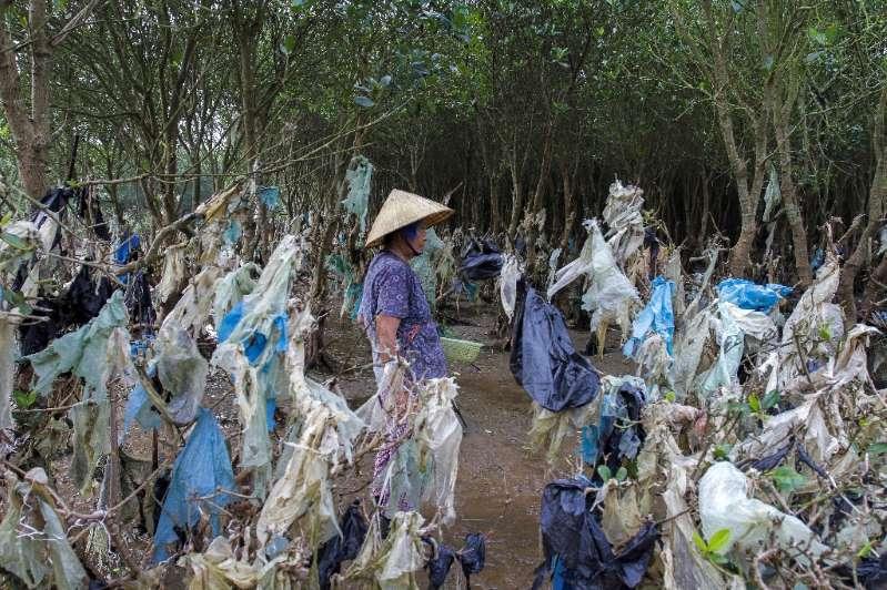 Une Vietnamienne marche dans une forêt côtière dont les arbres sont jonchés de plastique, le 18 mai 2018 à Thanh Hoa province, à 150 km au sud de Hanoï.