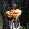 Le champignon 004.jpg
