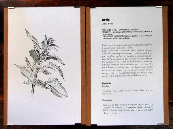 Une belle exposition d'illustration sur les plantes du Châtillonnais a eu lieu à la Bibliothèque Municipale....