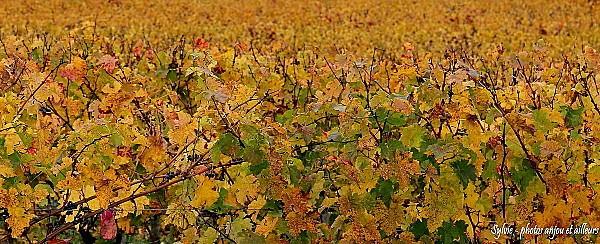 Vignes-forets 5375