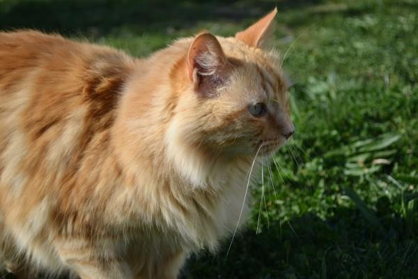 essai chat2